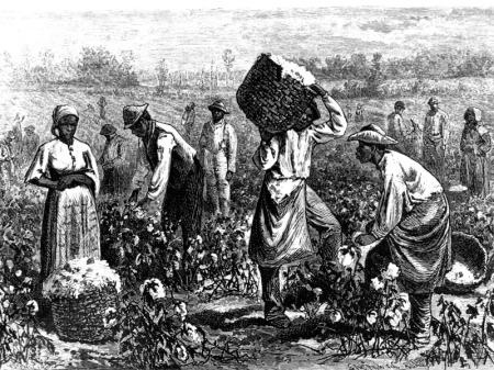 Black slaves toiling in a cotton field